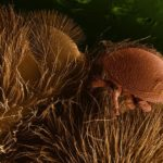 Varroa Destructor