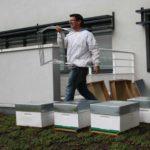 Installation des ruches en entreprise